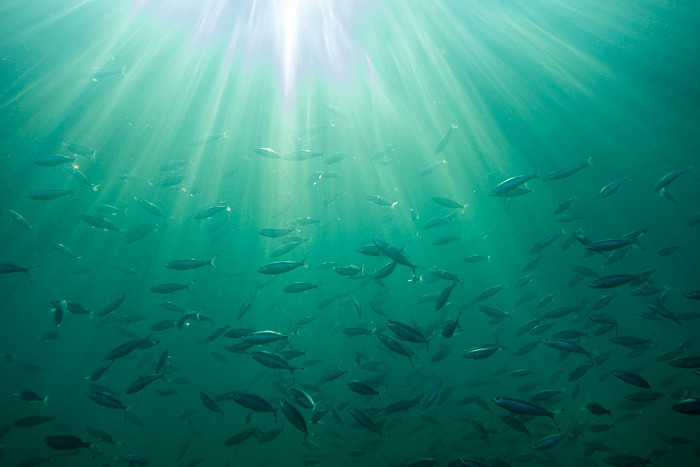 US Wind and Sea Risk Solutions partner for fisheries engagement efforts